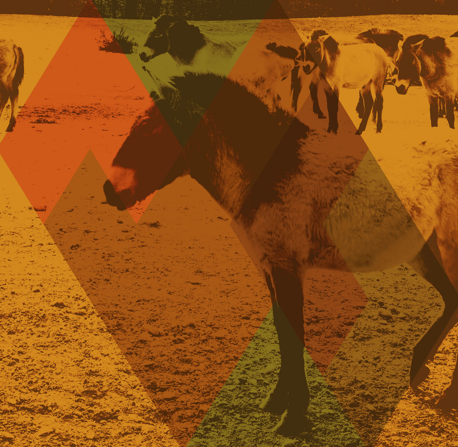 full screen background image